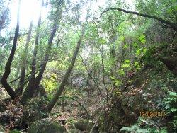 Boriana Gorge
