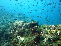 Shanti Divers