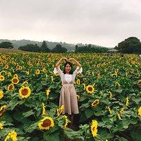 Kim Kyung-Sook Sunflower Farm