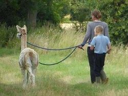 Ling's Meadow Alpacas
