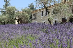 The Lavender Museum