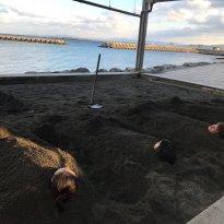 Beppu Beach Sand Bath