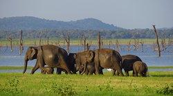 Chauffeur Sri Lanka by Dohansa Lanka Tours