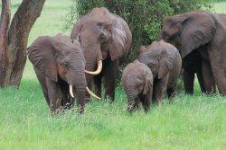 Tropical Adventure Safaris - Day Tours