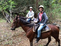 Lovely, quiet, strong horses are responsive, and highly cared for by the Trailride Operator.