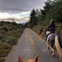 Wicklow Equi Tours