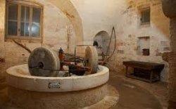 Museo dell'olio di oliva