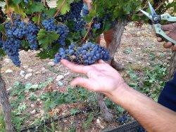 Mettler Winery