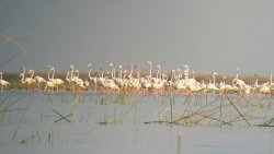 Nalsarovar Bird Sanctuary
