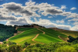 DAOU Vineyards