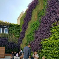 The Green Living Wall