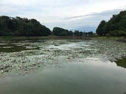 Fukada Pond