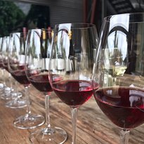 Stoniers Vineyard