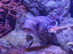 Moguranpia Machinaka Aquarium