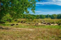The Elk and Bison Prairie