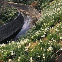 Narcissus Road