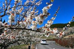 Hitoyoshi Plum Garden