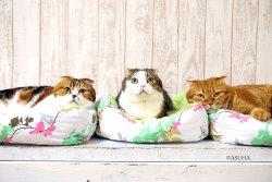 Cat Cafe Leon