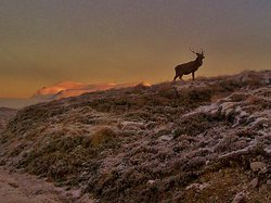Roaming Scotland
