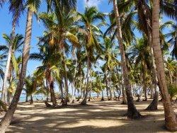 Отличный отдых в Доминикане