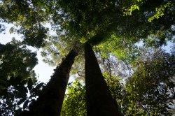 L.O.S.T Borneo - Jungle Trekking Specialist