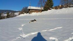 Auch der Hund hat Spass im Schnee