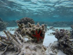 Snorkeling barriera bassa