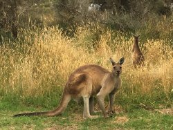 Nice park, friendly lady at reception, lots of kangaroos around!