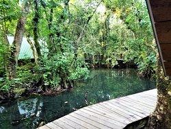 Delightful Jungle Lodge