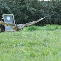 West Wales Falconry
