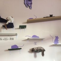 Purrple Cat Cafe