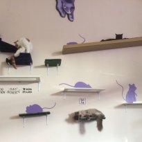 Purrple Cat Cafe