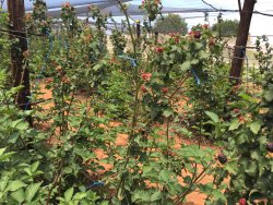 Bon-Af Berry Farm