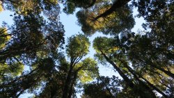 Reserva Natural El Triwe