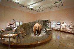Staatliches Naturhistorisches Museum