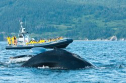 Whale-Watching Cruise in Forillon National Park
