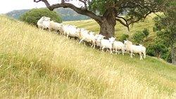 Akaroa Farm Tours