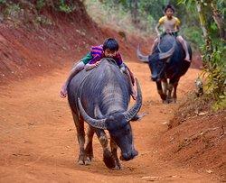 Green Nature Land Trekking Kalaw