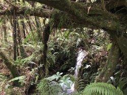 Tucked in Pristine Rainforest