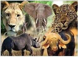 Neslo Tours and Safaris