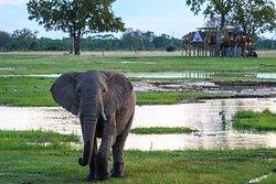 Wilderness Safaris Linkwasha Camp