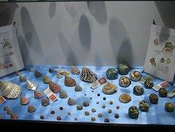 Isfahan Seashell Museum