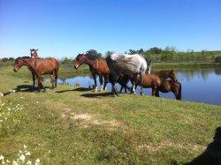Horseriding at Pink Geranium