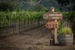 Paradigm Winery