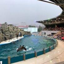 Batumi Dolphinarium