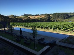 Early morning view of the pool and vines