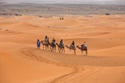 Desert Family Tour