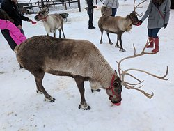 Leavenworth Reindeer Farm