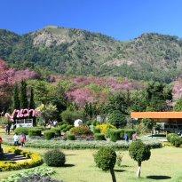 Khun Wang Royal Project