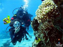 Divers Village - Diving Club